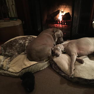 Dogs Relaxing By The Fire